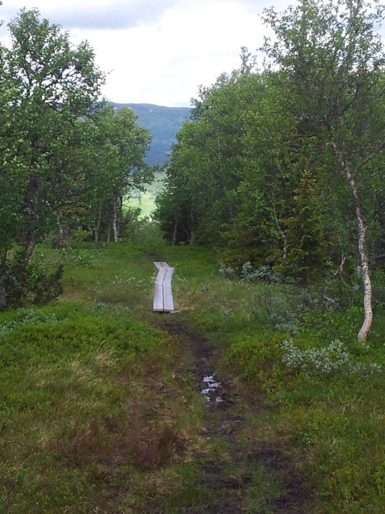 Första kilometerna var i skog. Här hade vi äntligen kommit till kalfjället och landskapet blev genast ett annat.