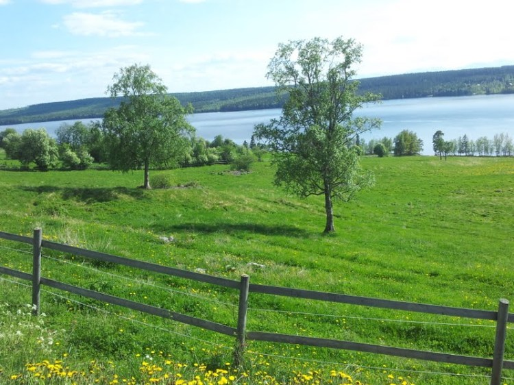 Det var vid en sån här hage som vi såg hingstarna rangordna sig inför sommarbetet.
