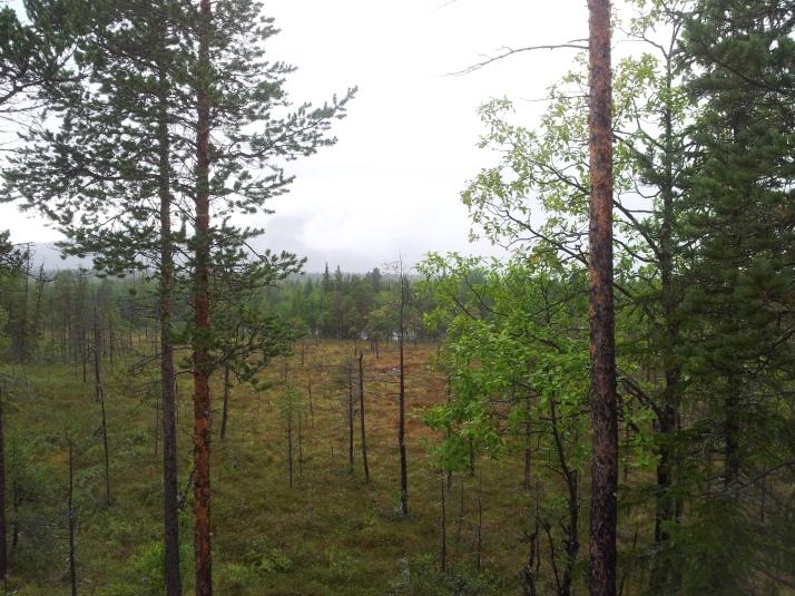 Vi red i skogen längs med Vålån. Bakom dimman skymtade Ottfjället, ett magiskt fjäll som är mitt favoritfjäll. Tyvärr var det svårt att ta bra kort i regnet.