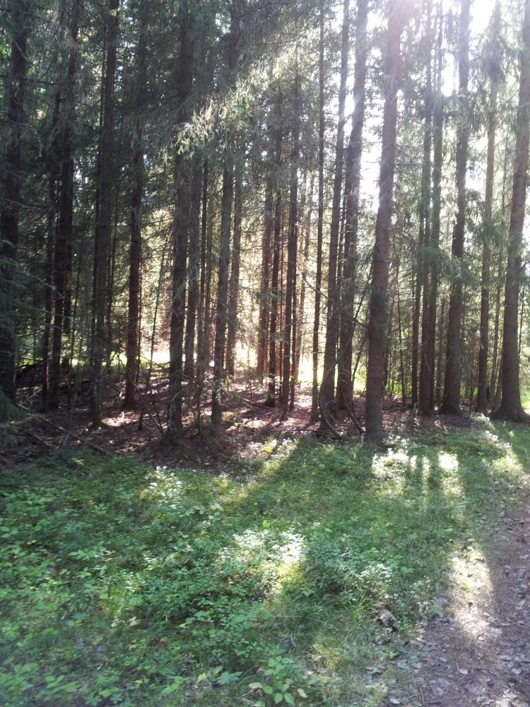 Rofylld dag på Andersön, vi var i princip ensamma i skogen.
