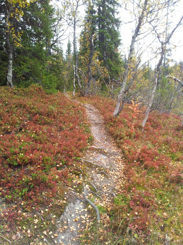 Stigarna upp till Renfjället  omgavs av vackra färger. Nästa gång vill jag springa här!