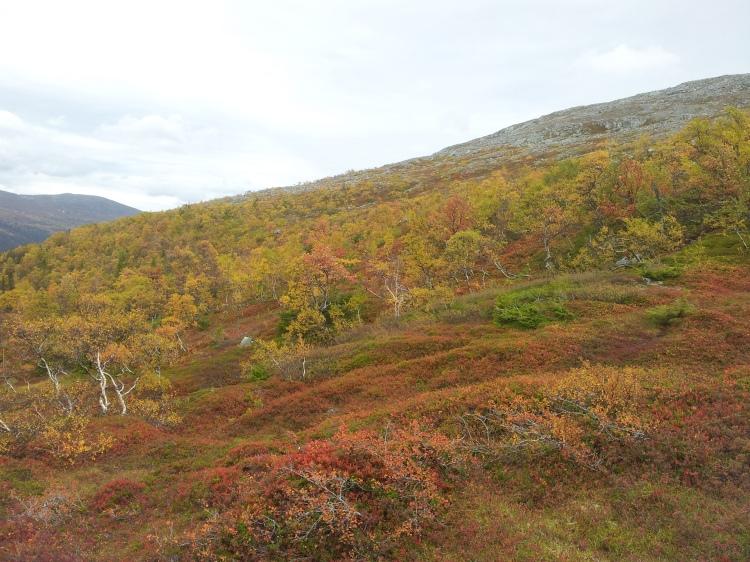 Fjället är fullt av liv. Hösten när den är som bäst.