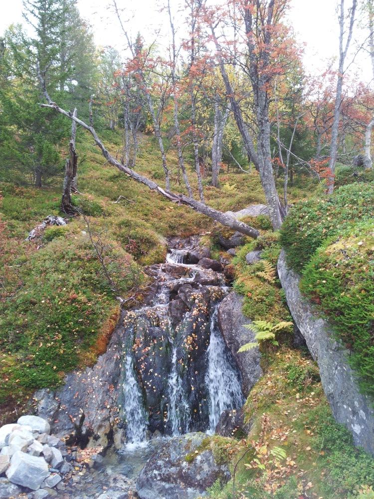 Vi valde en sommarled på väg tillbaka. Trollsk fjällskog med massa små vattenfall där Näcken skulle trivas.
