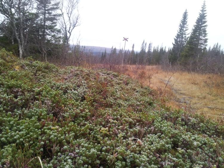 Vi började vandra strax innan kl.11.00 och då var det fortfarande frost på marken. Det knastrade härligt under kängorna.