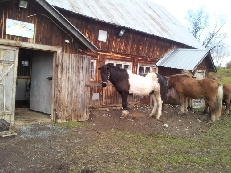 Visst är han fin! Det är något speciellt med hästar som är skäckar.