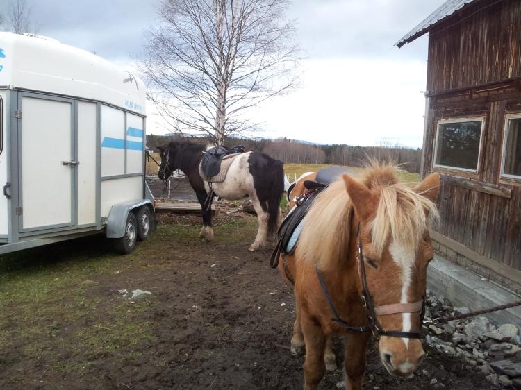 Extremt svårt att fota bra hästbilder. I förgrunden är det hästen som jag red. I bakgrunden den fina hästen som Anna red. Han var majestätisk. Fjällen syns långt bort i bakgrunden.