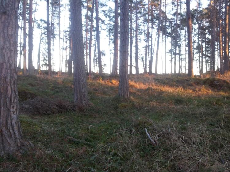 Svårt att tro att det är slutet av december. Det fanns knappt någon snö alls på Andersön.