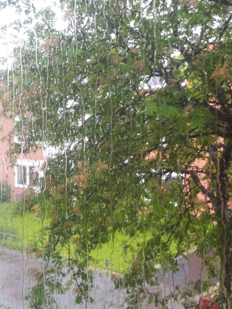 Regn på rutan är otroligt rofyllt!