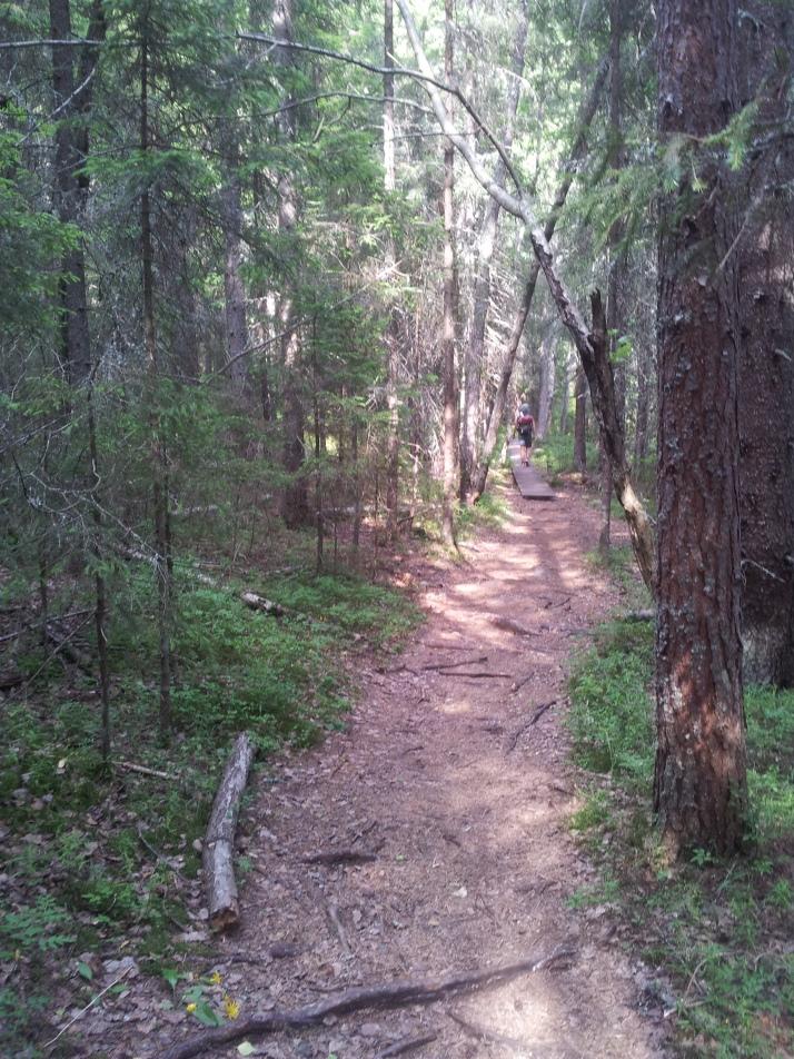 Eftermiddagens vandring var mesta dels skogstig i närheten av havet.